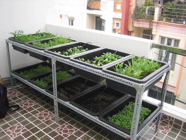 kệ trồng rau thông minh